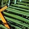 Domenica delle Palme - Salboro 2020